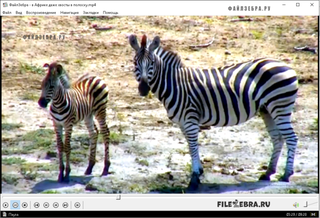 Проигрывание файлов в Media Player Classic Home Cinema (MPC-HC)